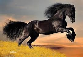 Con ngựa chờ làm việc lớn